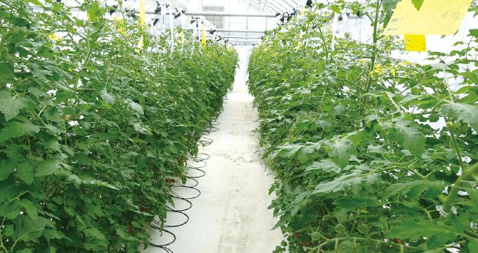 プロジェクト|次世代農業研究部門(T-PIRC農場)