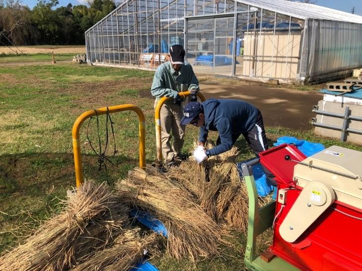 農場教員から脱穀作業のレクチャーを受ける参加者(11月4日)
